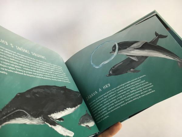 veľryby ilustrovaný sprievodca