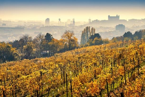 Vinohrady, Kováč, cena starostu. Fotosúťaž Nové mesto očami jeho obyvateľov 2021