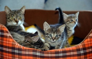 Mačky mačiatka