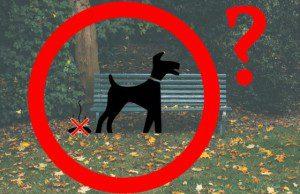 Fekálny problém, pes a hovienka
