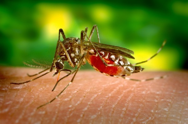 Komár a uštipnutie hmyzom