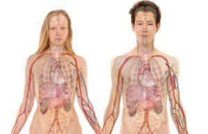 ľudské telo a anatómia