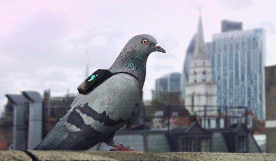 Holub monitoruje ovzdušie