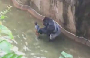 Gorila a chlapec