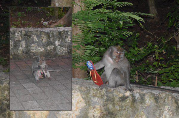 Opice v Ázii