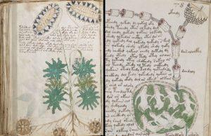 Voynichov rukopis