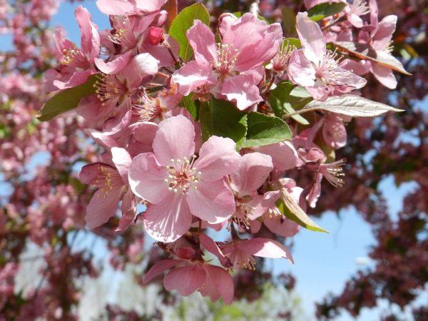 Apríl a kvitnutie ovocných stromov