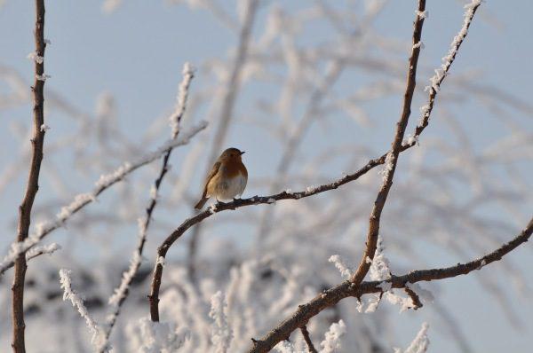 mráz a príroda cez december