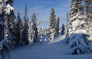 Január a zimná krajina