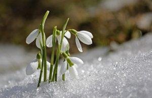 Február a snežienky