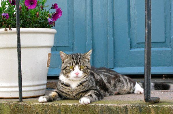 Mačka dvierka na dverách využije