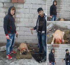 Hnusné týranie psov