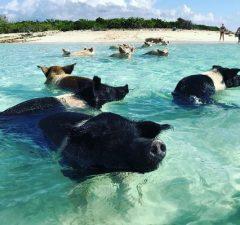 Prasiatka Bahamy