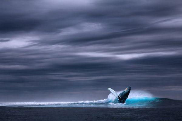 Nebezpečná hra Modrá veľryba