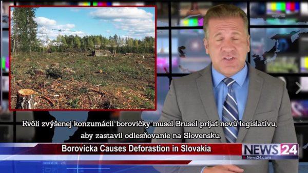 Američania údajne o borovičke, borovička z borovice