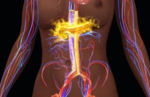 žlčník, vnútornosti