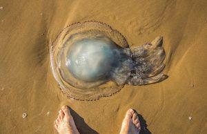Medúza vo vode aj na pláži a prvá pomoc