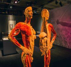 Výstava ľudské telo, BODY THE EXHIBITION