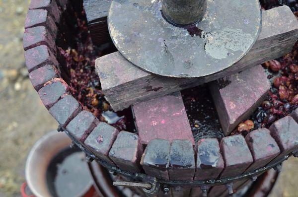 výroba ríbezľového vína