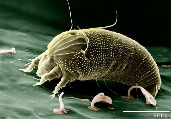 Alergia a alergén: roztoče
