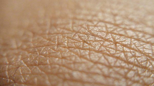 pokožka a koža