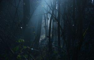 Temný les a článok Grgalica