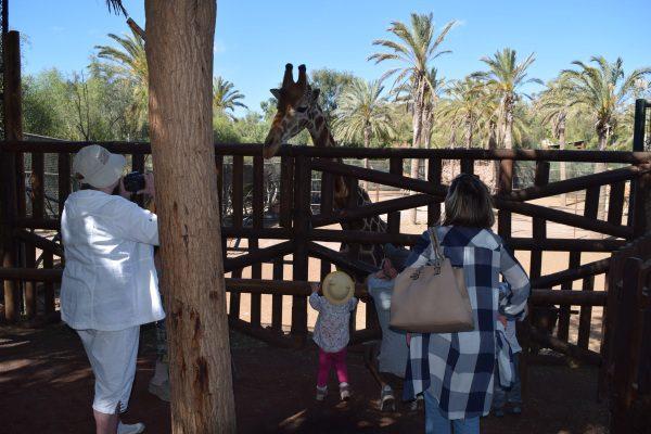 Oasis Park Fuerteventura, Kanárske ostrovy