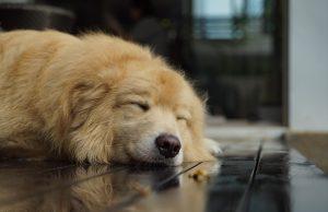 Pes, unavený, otrávený č lánok o trávení psov
