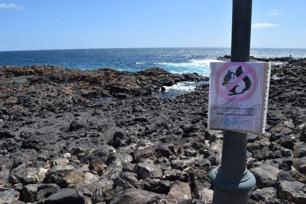 Fuerteventura Caleta de Fuste, veveričky na pláži