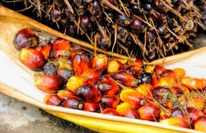 Palmový olej, alebo palmový tuk