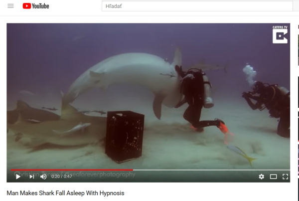 žralok emma potápanie a tonická imobilita