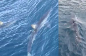 žralok makarska riviéra