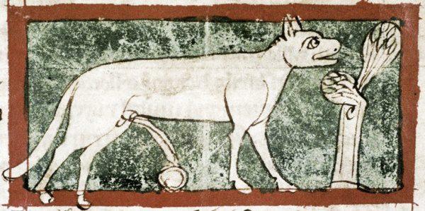 Lyngurium, Bodleian Library, MS. Douce 88, Folio 8r
