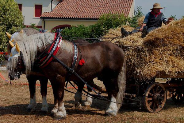 Kôň pohonič