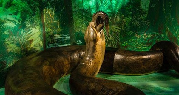 titanoboa, source in post