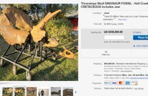 Triceratops na predaj