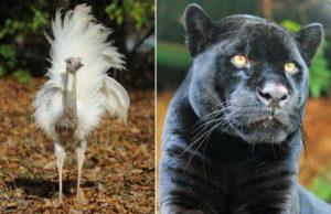 Zvieratá v ZOO bojnice, chyby sfarbenia