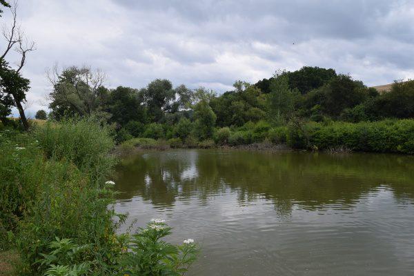 Skačany rybník a nutrie