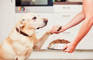 Pes a kŕmenie