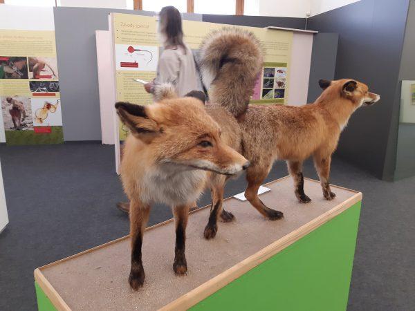 Západočeské muzeum v Plzni, milování v přírode, jakub šmíd