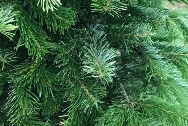 Jedlička stromček na VIanoce