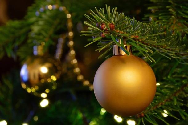 živý vianočný stromček