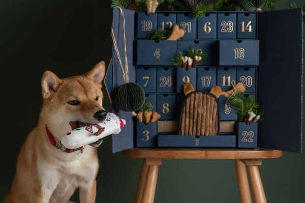 pes a adventný kalendár