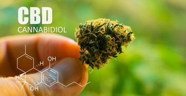 CBD canabiol