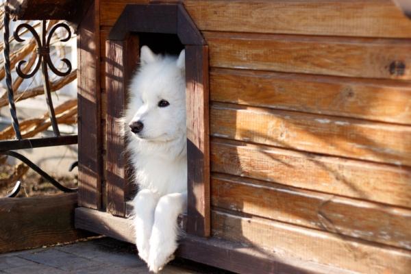 pes a psia búda