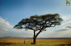 Pravidlá Serengeti, Viasat Nature
