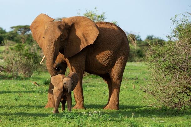 slon a jedno zo sloních mláďat
