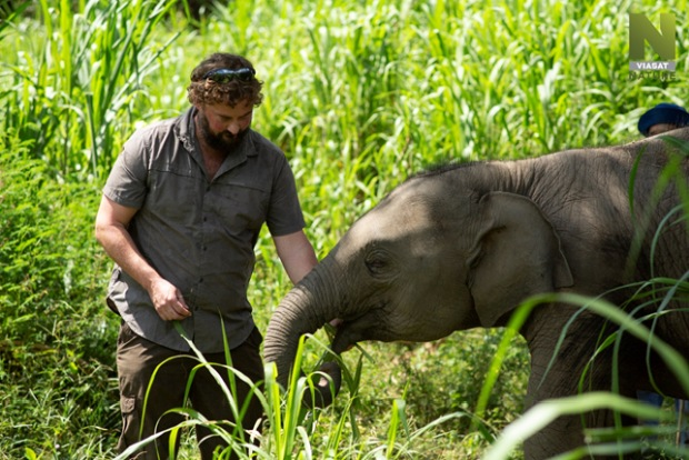 Nemocnica pre slony, Thajsko, dokument VIasat Nature