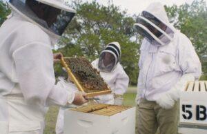 včely a včelárstvo, dokument na viasat nature