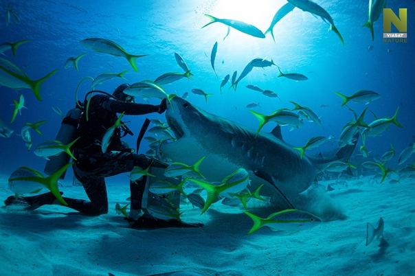žraloky, žralok v moriach na VIasat nature